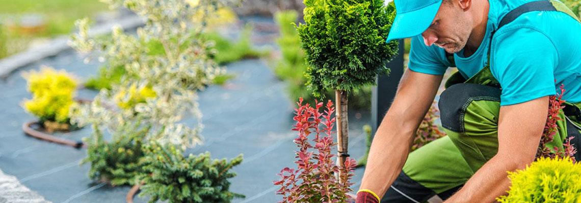 Aménagement de jardin et entretien d'espaces verts